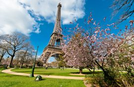Eiffel Tower from Champs de Mars park in Spring with cherry blossom, in Paris. - FWD Travel Insurance Singapore